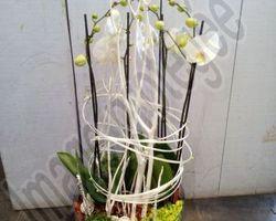 Les Bouquets d'Elise – Fretin - Les plantes,les compositions et les bouquets